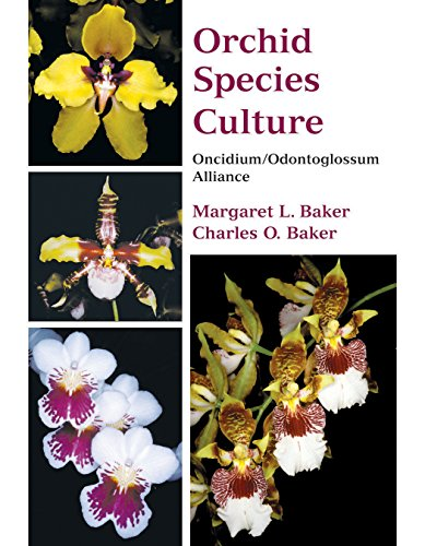 Orchid Species Culture: Oncidium/Odontoglossum - Orchid Oncidium Care