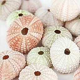 CYS Colorful Sea Shells, Pink-White-Green Sea Urchins Beach Seashells for Nautical Decor - Bulk 25 pcs