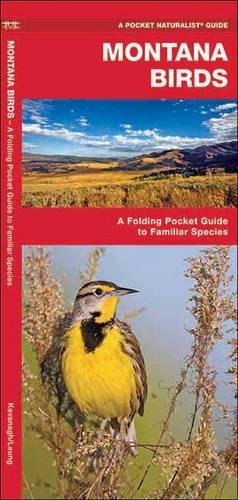 Montana Birds: A Folding Pocket Guide to Familiar Species (A Pocket Naturalist Guide) Montana State Bird