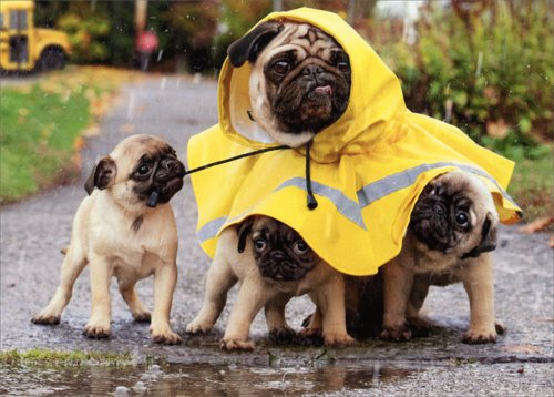 Rain Poncho Pug/Mom And Pups - Avanti Dog Mother's Day Card