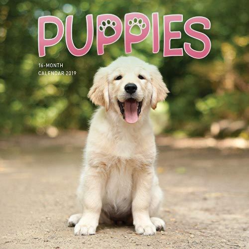 2019 Puppies Mini Wall Calendar, by Carousel Calendars