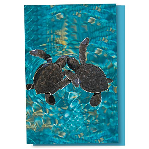 Tree-Free Greetings EcoNotes 12 Count Baby Sea Turtles All Occasion Notecard Set with Envelopes, 4 x 6 Inches (FS56932) by Tree-Free Greetings