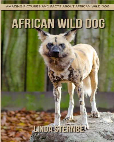 (African Wild Dog: Amazing Pictures and Facts About African Wild Dog)