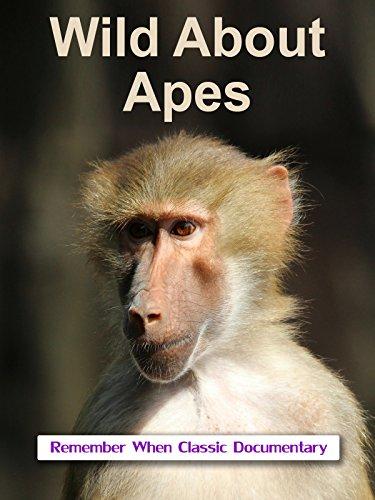 Gibbon Monkey - Wild About - Apes