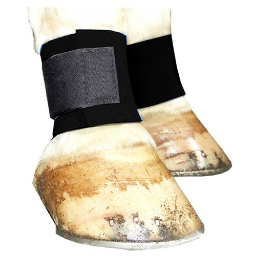 Horse Ankle Boots - Intrepid International Neoprene Ankle Wrap