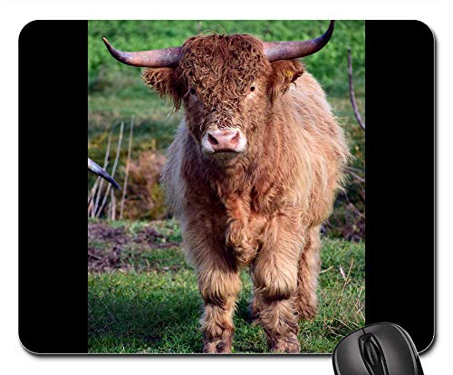 Mouse Pad - Bull Boy Galloway Beef Hairy Fur Frontal ()