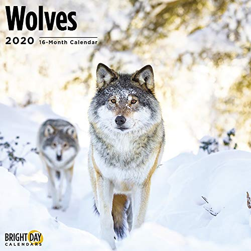 2020 Wolves Wall Calendar by Bright Day, Babies and Families