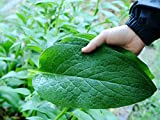 Organic Comfrey & Arnica Salve - Bruised & Sore