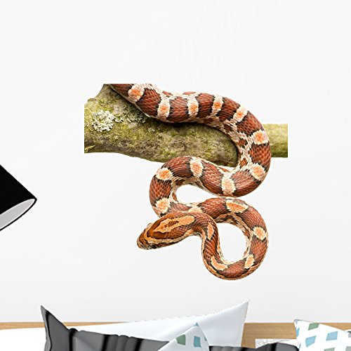 Wallmonkeys Corn Snake Wall Decal Peel and Stick Graphic WM202720 (18 in H x 18 in W)