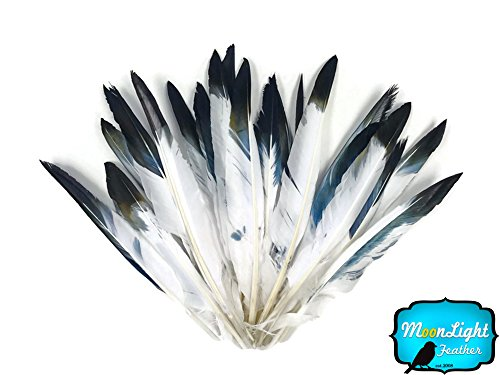 Moonlight Feather | 1 Pack - Black Tipped White Duck Pointer Feathers 0.50 Oz. Imitation Eagle Hawk Feathers ()