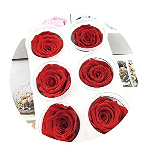 Sevem-D Preserved Flowers Flower Immortal Rose 5Cm Diameter Eternal Life Flower Material Gift 118