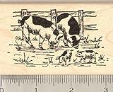 Farm Pig Rubber Stamp, Piglets, Saddleback