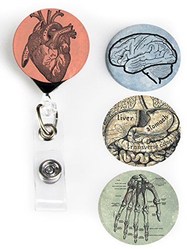 Buttonsmith Anatomy Tinker Reel Retractable Badge Reel with Alligator Clip and Extra-Long 36 inch Standard Duty Cord - Made in The USA, 1 Year (Pull Reel)