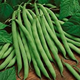 buy David's Garden Seeds Bean Bush Blue Lake 274 30085A (Green) 100 Heirloom Seeds now, new 2018-2017 bestseller, review and Photo, best price $8.49