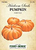 Ferry-Morse 3751 Heirloom Seeds Pumpkin - Fairy Tale