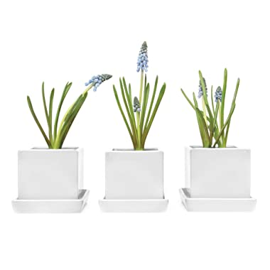 Chive - Square Succulent Cactus Pot and Saucer, 3  Ceramic Flower and Plant Pot with Drainage Hole/Saucer, Mini Pot for Indoor/Outdoor Garden and Home Decor, Bulk Set of 3 (White)