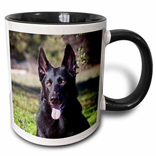 3dRose Danita Delimont - Dogs - Portrait of a German Shepherd dog - NA02 ZMU0133 - Zandria Muench Beraldo - 11oz Two-Tone Black Mug (mug_140413_4) -