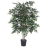 Vickerman TBU4240-06 Green Ficus Everyday Bush