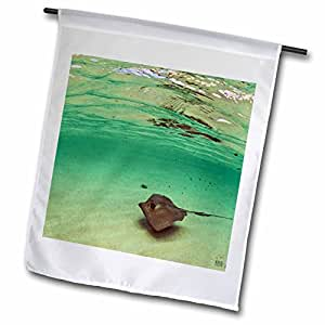 Kike Calvo Turks and Caicos - Southern stingray (Dasyatis americana) distant shot in blue clean Caribbean waters at Gibbs Cay - 12 x 18 inch Garden Flag (fl_45512_1)