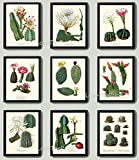 Botanical Print Set of 9 Antique Beautiful Cactus Plant Blooming White Pink Yellow Flowers Tropical Desert Garden Nature Home Room Decor Wall Art Unframed offers