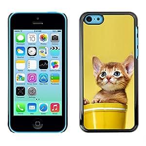 Be Good Phone Accessory // Dura Cáscara cubierta Protectora Caso Carcasa Funda de Protección para Apple Iphone 5C // Cute Cat Kitten In A Pot
