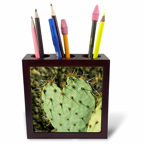 - 3dRose USA, Arizona, Sonoran Desert, Saguaro NP, Prickly pear Cactus Tile Pen Holder, 5