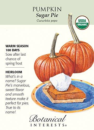 Sugar Pie Pumpkin Seeds - 2 grams - Certified Organic (Pie Sugar Pumpkin)