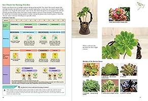 Succulent /& Bonsai Compost 6L Easy Carry Pack Miracle-Gro Premium Cactus