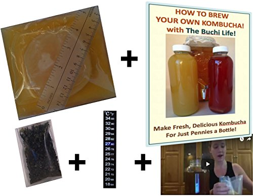 kombucha-scoby-kit-free-e-book-instructional-video-our-premium-tea-temperature-strip-100-percent-org