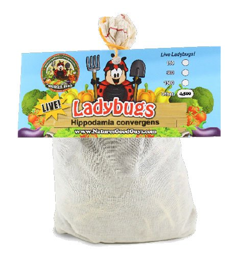 4500-live-ladybugs-good-bugs-guaranteed-live-delivery