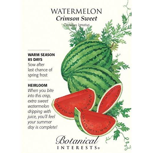 Cheap Crimson Sweet Watermelon Seeds - 2 grams - Botanical Interests hot sale