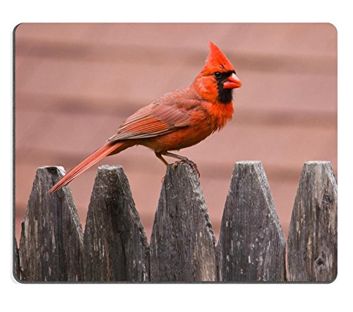 MSD Mouse Pad Natural Rubber Mousepad IMAGE of bird nature cardinal wildlife male red wing avian feathers feeder birds backyard songbird perched winter