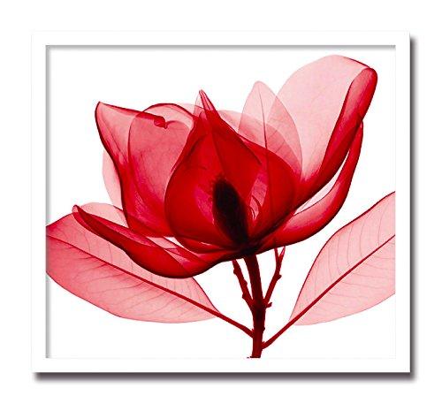 レントゲン フォトフレーム Steven N. Meyers Red Magnolia レッド マグノリア B00CRFAVTG