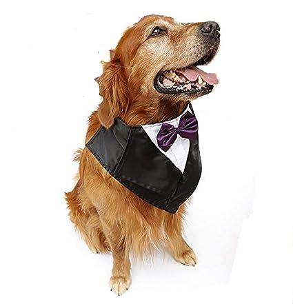 Amazon.com: DAN - Disfraz de perro grande de esmoquin ...