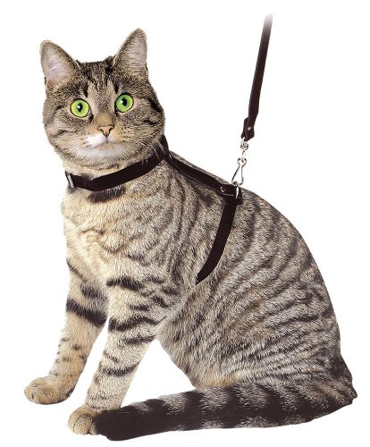 Kerbl 83819 Katzengeschirr mit Leine 120 cm, schwarz aus Veloursleder