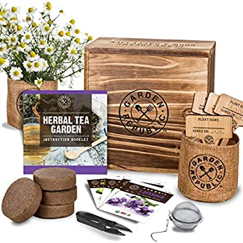 Amazon.com : Natures Blossom Herb Garden Seed Starter Kit ...