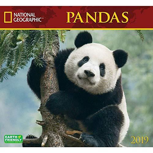 Pandas National Geographic 2019 Wall Calendar