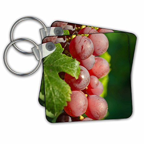 Danita Delimont - Vineyards - France, Alsace, Eguisheim. A bunch of Gewurztraminer grapes. - Key Chains - set of 2 Key Chains (Alsace Set)