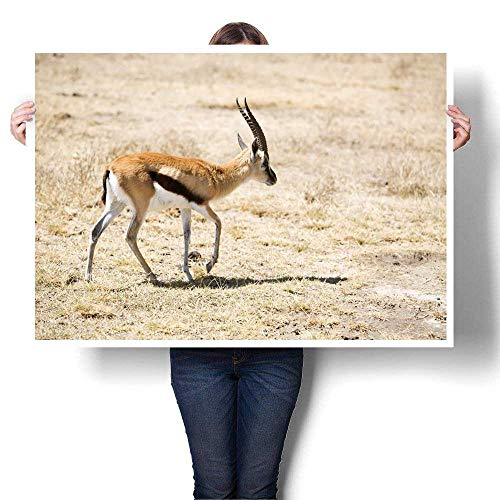 Anyangeight Canvas Print Wall Art Thomson Gazelle Decorative Fine Art Canvas Print Poster K 48
