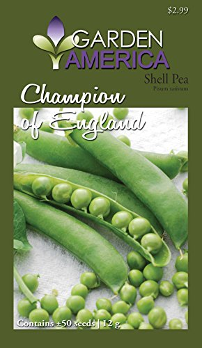 Champion of England Shell Pea Seed