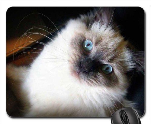himalaya blue eyed cat Mouse Pad, Mousepad (Cats Mouse Pad)