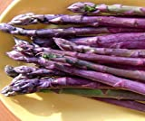 Purple Passion Asparagus 25 Roots - MALE DOMINATE - Heirloom/No GMOs
