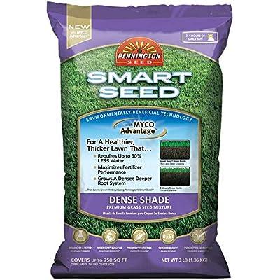 Pennington Seed Smart Seed Dense Shade Premium Grass Seed Mixture 750 Sq. Ft. Ba : Garden & Outdoor