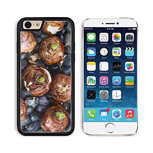 Apple iPhone 6 6S Aluminum Case Many Paperwhites bulb flowers ready for planting IMAGE 24299451 by MSD Customized Premium Deluxe Pu Leather generation Accessories HD Wifi Luxury Protector