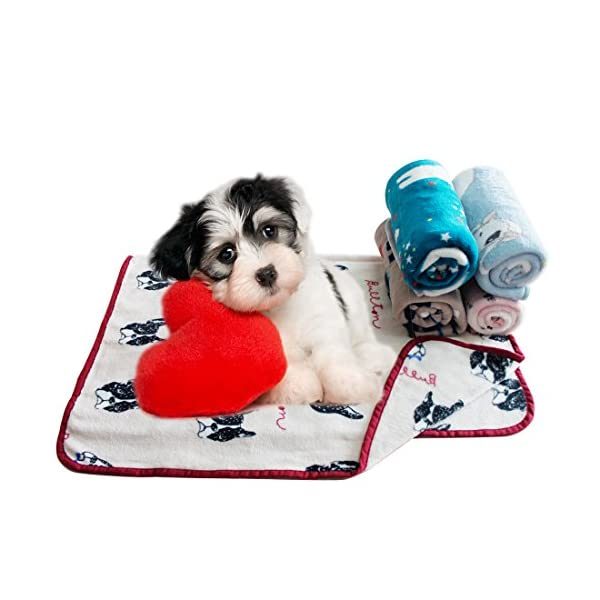 (Bichon) – Scheppend Cosy Cuddly Pet Fleece Blanket Dogs Cats Bed Throws for Couch,Car Backseat,Crate,Kennel and Carrier Click on image for further info. 6