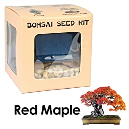 Eve\'s Red Maple Bonsai Seed Kit, Woody, Complete Kit to Grow Red Maple Bonsai from Seed