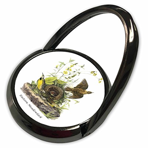 3dRose BLN John James Audubon Collection - Eastern Meadowlark by John James Audubon - Phone Ring (phr_114007_1) (Meadowlark Collection)