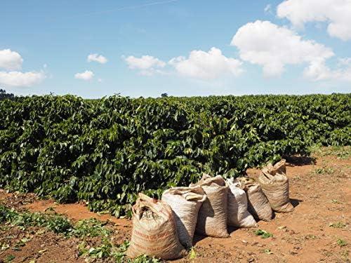 甘さとコクをマイルドにまとめた高コスパ! ブラジル プラナウト農園 深煎り コーヒー豆 (500g 中細挽き)