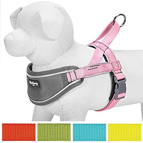 "Blueberry Pet 5 Colors Soft & Comfy 3M Reflective Strips Padded Dog Harness Vest, Chest Girth 20.5"" - 26"", Pink, Medium, Nylon Adjustable Training Harnesses for Dogs"