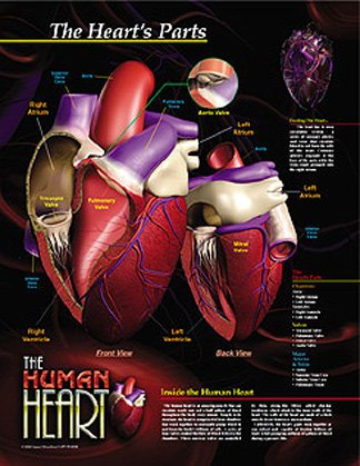 The Human Heart Poster Series Framed, Posters, 5 Print Set in Black Metal Frames